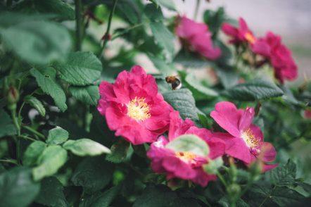 cropped-lintukoto-9561.jpg